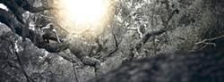 FOREST OF FLYING DAGGERS :  One of Joseph Gorman's Forest of Flying Daggers photographs tied for second place, Best of Show. - PHOTO BY JOSEPH GORMAN