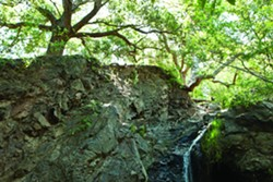 DO GO CHASING WATERFALLS:  The serene 800-acre Reservoir Canyon Natural Reserve, which lies just northeast of the city of SLO, will see a set of improvements and new trails thanks to a conservation plan recently approved by the City Council. - FILE PHOTO BY STEVE E. MILLER