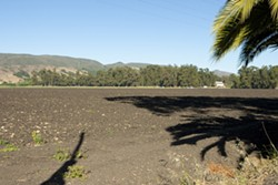 FOR SALE :  The 131-acre property in unincorporated San Luis Obispo County—ground zero in a 2005 annexation battle and a subsequent ballot initiative to develop the land—has been put up for sale by its owner, prominent rancher Ernie Dalidio, for nearly $20 million. - PHOTO BY STEVE E. MILLER