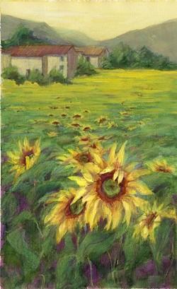 SUNFLOWER FIELD : - IMAGE BY TRICIA REICHERT