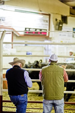 PLACING BIDS:  Jason Glenn, an order buyer with B&G Cattle Company (right), gives a thumbs up to place a bid at the Templeton Livestock Market. - PHOTO BY HENRY BRUINGTON
