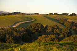 IS BIGGER BETTER? :  If approved, the Price Canyon planning area would increase the square mileage of Pismo Beach by about 50 percent. Many residents worry doing so would burden services, resources, and infrastructure. - FILE PHOTO BY STEVE E. MILLER