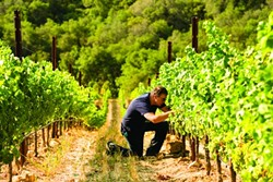 THE DAOU OF WINE:  Winemaker Daniel Daou, founder of the PRCC, manages the vineyards on his family estate. - PHOTO COURTESY OF DAOU VINEYARDS