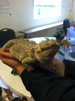 SPINY!:  Chase—my date to the Turtle, Tortoise, and Reptile Show—holds a bearded dragon. - PHOTO BY ANNA WELTNER