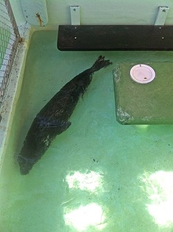 cover_MBAquarium_seal2_shallow.jpg