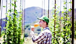 BROTHERS TALENTED:  Toro Creek Brewing Company founder Brendan Cosgrove employed the talents of his brothers Caleb McLaughlin, brewmaster, and Kyle Batoor-Cosgrove, farmer, to create Toro Creek Farms. The operation produces organic hops, - bushels of fresh barley, and a range of herbs, veggies, and citrus on the family-owned land. - PHOTO BY DUMMIT PHOTOGRAPHY