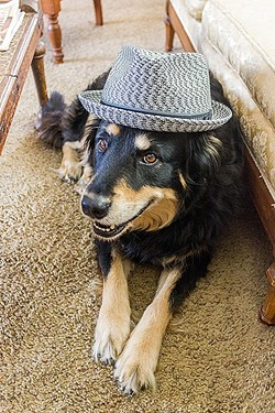 GONE TO THE DOGS:  Singer-songwriter Craig Nuttycombe, with a bunch of his extra talented musical friends, plays a special concert on Nov. 12 at the Steynberg Gallery. I asked for a photo; he sent me one of his dog. - PHOTO BY CRAIG NUTTYCOMBE