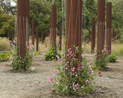 REPURPOSED :  The large metal columns were supposed to support structures above them; now they're perfect for growing snap peas. - PHOTOS BY STEVE E. MILLER