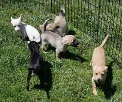 AND PUPPIES TOO!:  Laton Animal Rescue & Care (559-905-4063) also set up shop by PETCO. - PHOTO BY GLEN STARKEY