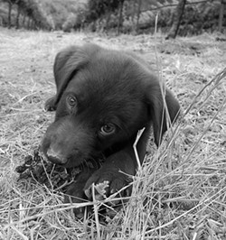THE PINOT PUPPY: