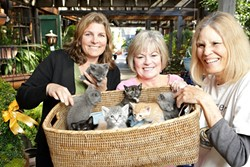 FRIENDS FOR LIFE :  Annie Driezler (left), Rhonda Myers, and Lynette Crane (right) - of Feline Network rescue, shelter, and arrange the adoptions of cats sure to improve - companions' lives. - PHOTO BY STEVE E. MILLER