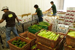 VEGGIE LINE :  Drew Summerfield, Andrea Chavez, and Adam Stevens pack over 100 boxes of fresh produce from Talley Farm which will be delivered latter in the day. - PHOTO BY STEVE E. MILLER