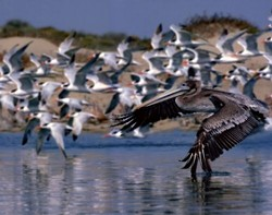 """BIRDS IN FLIGHT� THIRD PLACE ANIMALS - COLOR: - GARRY JOHNSON"