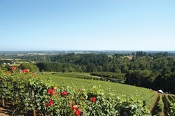 WAIT, THAT ISN'T CALIFORNIA! :  Take a long look, locals. This is what Oregon's wine country looks like. But before you decide to pick a fight, taste some of what our northern neighbor has to offer. - PHOTO BY DAN HARDESTY