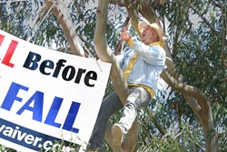 I SPEAK FOR THE TREES:  Joey Racano was arrested for trespassing after voicing his opposition to the Los Osos sewer project from this tree on July 7. The charges were dropped this week after a map showed that the tree was on public property. - FILE PHOTO BY CHRISTOPHER GARDNER