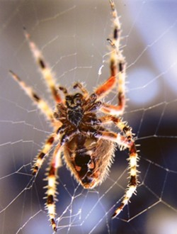 ARACHNOPHOBIA:  Honorable Mention 1 - WES WEEMS
