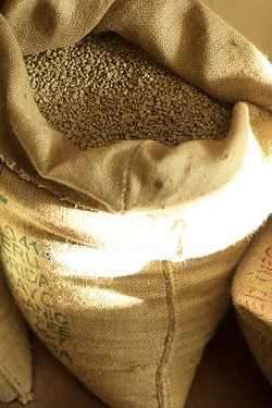 GREEN BEANS :  These are unroasted coffee beans at Joebella Coffee Roasters in Atascadero.