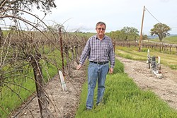 PLUCKED:  Dana Merrill, an early proponent of the water district, stands next to his vineyard east of Templeton. - PHOTO BY DYLAN HONEA-BAUMANN