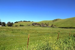GREEN AS FAR AS THE EYE CAN SEE:  The view from Harmony looking toward Harmony Cellars. - PHOTO BY DYLAN HONEA-BAUMANN