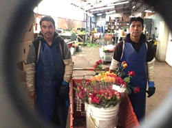 GIVE IT AWAY:  Jose and Luis at Koch nursery in Nipomo load up a cart with roses for Steve Bennett and his Flower Power team. Koch and three other nurseries in Nipomo donate their surplus flowers to be delivered weekly. - PHOTO COURTESY OF STEVE BENNETT