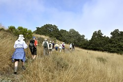 MEMBERS ONLY :  A group of Land Conservancy of SLO County members/supporters checks out some of the Pismo Preserve's trails on a members-only hike on a recent Wednesday. - PHOTO BY CAMILLIA LANHAM