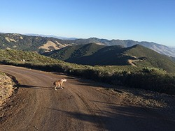 RIDGELINE ROAD:  West Cuesta Ridge Road, also known as TV Tower Road, also known as Forest Service Road 29S11, runs from the top of Highway 101's Cuesta Grade to the Cuesta Ridge Botanical Area. - PHOTO BY CAMILLIA LANHAM