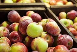 CUT ME OFF A PIECE OF THAT :  It's apple season in Avilla Valley, and the fruit stands are packed with the finest peak-season produce you've ever had the pleasure of slurping up. - PHOTO COURTESY OF GOPHER GLEN