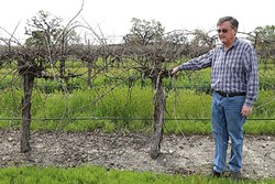 RESOURCE MANAGEMENT:  Dana Merrill was an early proponent for the Paso water district that residents voted down earlier this year. The area only has a few more months to come up with a plan B to manage the Paso Robles Groundwater Basin. - FILE PHOTO BY DYLAN HONEA-BAUMANN