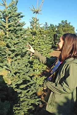 FEELIN' IT OUT :  Clare checks out one of the trees at Brookshire Farms in San Luis Obispo. - PHOTO BY PETER JOHNSON