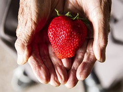 LOCAL:  Haruo Hayashi, 91, whose family is known for farming strawberries in SLO County, said he's had enough of berries. - PHOTO BY JAYSON MELLOM