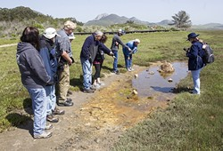 ESTUARY GAWKIN':  On the tail end of a docent-led walk from the salt marsh to the mud flats near Morro Bay State Park on April 11, walk attendees check out the creatures that call a salty pond home. - PHOTO BY JAYSON MELLOM