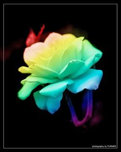 musicartsculture_arts2-1-f12ecbcbb1157aa9.jpg