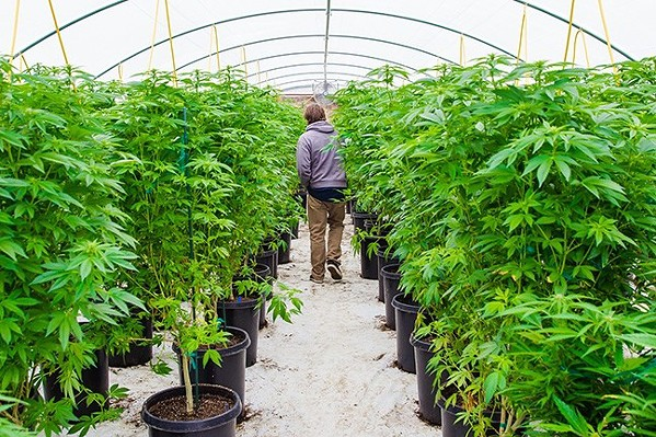 OUT OF REACH State Assemblyman Jordan Cunningham (R-Templeton) says a loophole in the Adult Use of Marijuana Act could endanger California's children. He's hoping to close it with a proposed bill. - FILE PHOTO BY JAYSON MELLOM