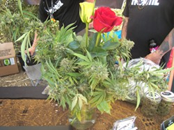 BLOOMING BUDS Slocal Roots Farms showed off a marijuana plant arrangement. - PHOTOS BY ERICA HUDSON