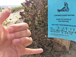"""SHARK WAS HERE Thankfully, this shark sighting warning """"expired"""" on the day I decided to go to Cayucos. Very reassuring ... - PHOTO BY PETER JOHNSON"""