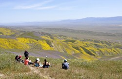 DEADLINE LOOMS Federal recommendations about the future status, boundaries, and protections of the Carrizo Plain National Monument are expected by Aug. 24. The Carrizo was one of 27 national monuments under review by the U.S. Department of the Interior. - FILE PHOTO