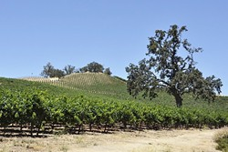 GREEN ACRES The size and classification of SLO County's farmland is constantly changing, as urban development continues to rise. - FILE PHOTO