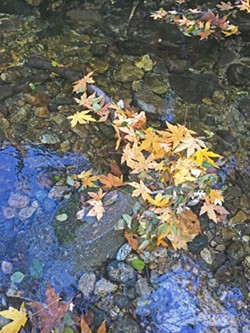 FALL IN WINTER You can gaze at colorful leaves along the Nacimiento River in December. - PHOTO BY CAMILLIA LANHAM