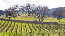 WHERE'S THE WATER? Landowners between Atascadero and Paso Robles and west of Highway 101, are asking SLO County for stronger groundwater protections amid increased development and drought. - FILE PHOTO BY JAYSON MELLOM