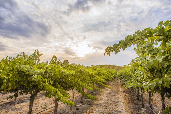 THE CREEK THAT COULD Parrish Family Vineyard's Adelaida Creek restoration project will significantly recharge the aquifer and replenish Paso Robles area wells with naturally captured rainfall that otherwise would end up overrunning city sewer drains. - PHOTO COURTESY OF PARRISH FAMILY VINEYARD