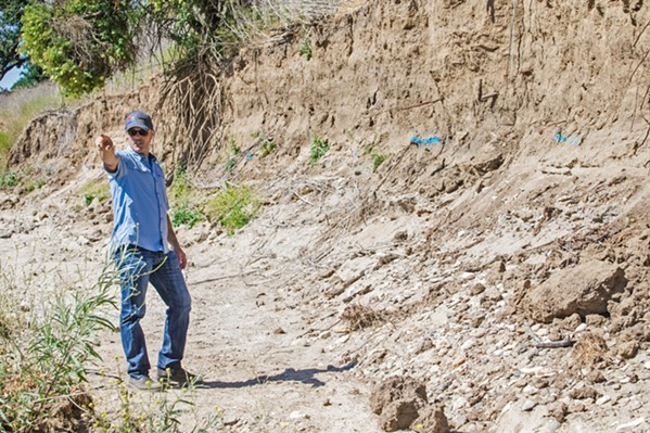 ERODING Chris Alakel, water resources manager for the city of Paso Robles, stands in the Salinas River, where rapid erosion of the bank is threatening to damage or destroy a wellfield that pumps about half of the city's water. - PHOTO BY JAYSON MELLOM