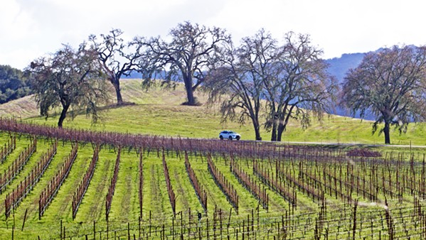 WINE RULES ALL Vineyards in SLO County, like this one in Adelaida, produced wine grapes with a record-high combined value of $268 million in 2017. Yet, the agricultural industry as a whole tapered slightly last year, as farmers struggled to find field labor. - FILE PHOTO BY JAYSON MELLOM