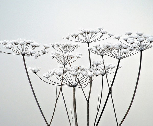 NATURAL Whimsical photos like Ice Bloom by artist Nily Harel could almost pass for paintings with their surreal aesthetic. - PHOTO COURTESY OF NILY HAREL