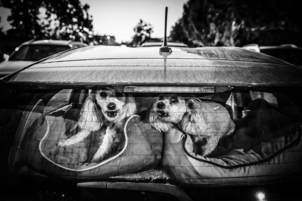 Back Off - PHOTO BY JAYSON MELLOM
