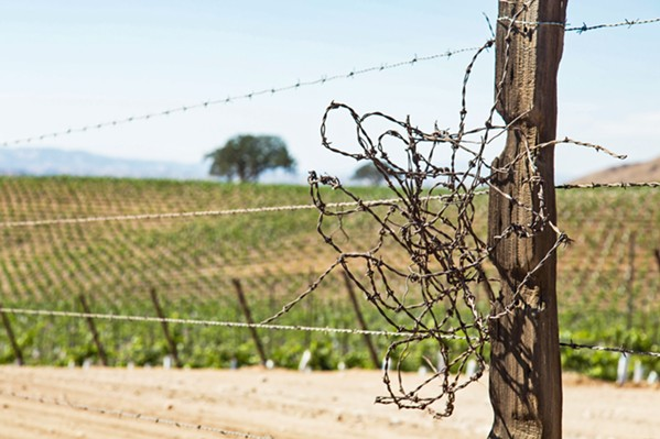 SAVE OR SUPPLEMENT? Paso Robles Groundwater Basin decision makers are discussing multi-million-dollar water projects that could bring aid to the aquifer that serves Paso Robles wine country. - FILE PHOTO BY TOM FALCONER