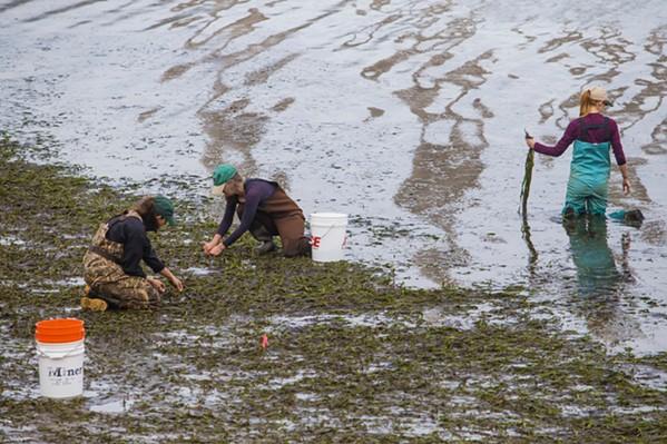 Eel Grass - PHOTO BY JAYSON MELLOM