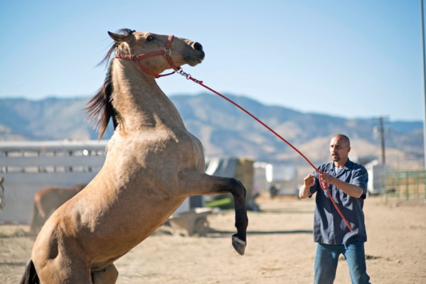 EQUINE THERAPY Violent convict Roman Coleman (Matthias Schoenaerts) is given a shot at rehabilitation via a therapy program involving wild mustangs, in The Mustang, based on an actual rehabilitation program in Carson City, Nevada. - PHOTO COURTESY OF CANAL+