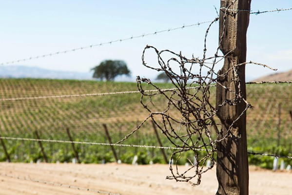 EXTENSION? Six-year-old water restrictions for the Paso Robles Groundwater Basin will likely be extended by San Luis Obispo County supervisors on June 18. - FILE PHOTO BY TOM FALCONER