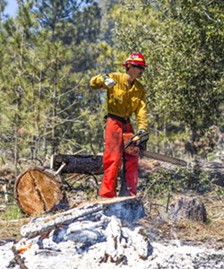 REMOVING THE SOURCE: As the number and severity of wildfires increases, officials are looking at fuel reduction measures, such as tree removal, to protect communities. - FILE PHOTO BY SPENCER COLE