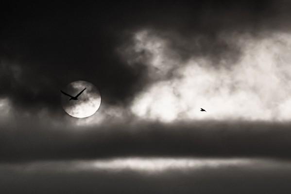 Wild - PHOTO BY JAYSON MELLOM